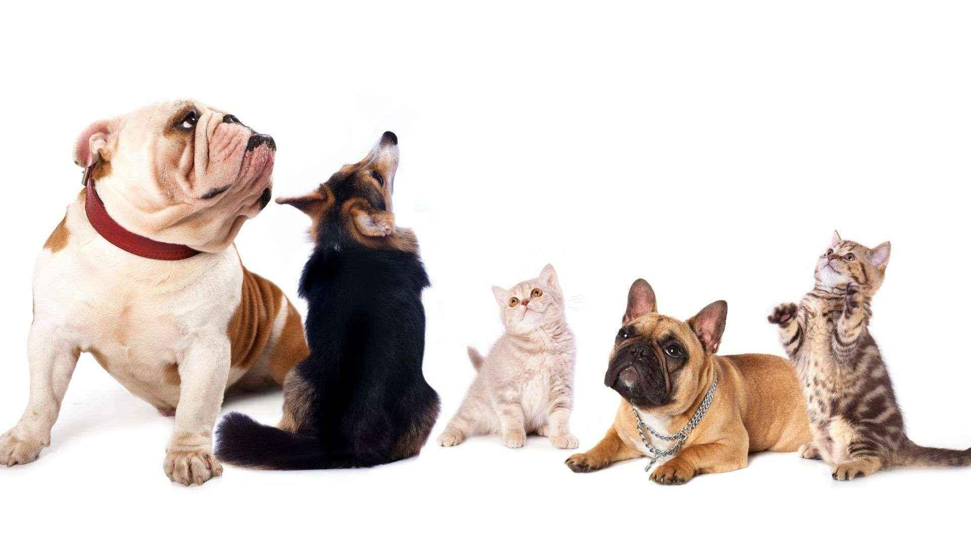 ozonoterapia en animales Tienda Veterinaria